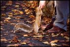 Squirrel, Feeding Man