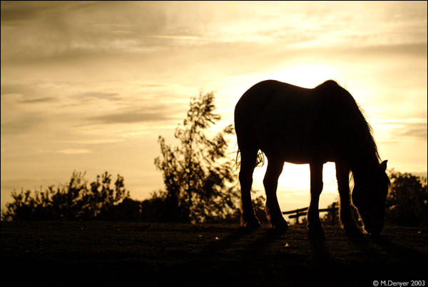 Stallion Sunset